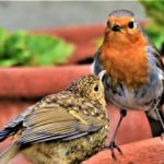 Oxfordshire photographer snaps two little birds for 'family' theme