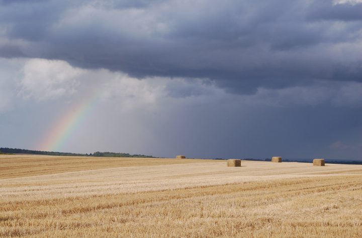 What will the late harvest mean for partridges?