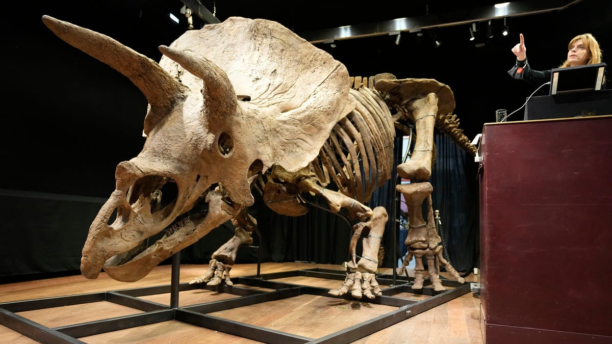 Largest Triceratops Skeleton Ever Found Sells for $7.7 Million at Auction